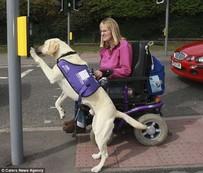 เจ้า Byron หมาแสนรู้ กดเงินจาก ATM ช่วยเจ้าของพิการ