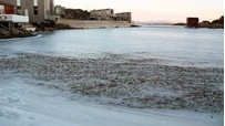 นอร์เวย์หนาวจัด ปลานับพันถูกแช่แข็ง