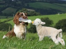 สัตว์โลกมหัศจรรย์ ความรักข้ามสายพันธุ์