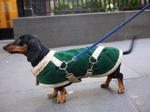 แฟชั่นรับลมหนาว กับชุดกันหนาวน้องหมา