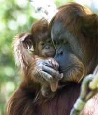 ภาพวันแม่ กับสัตว์โลกน่ารัก