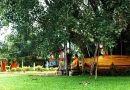 ต้นศรีมหาโพธิ์พันปี อำเภอโคกปีบ ปราจีนบุรี