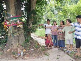 แห่ขอหวย! ต้นมะพลับยักษ์ขึ้นกลางถนนที่ จ.นครปฐม