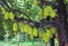 ดูดวง ต้นไม้มงคล 9 อย่าง